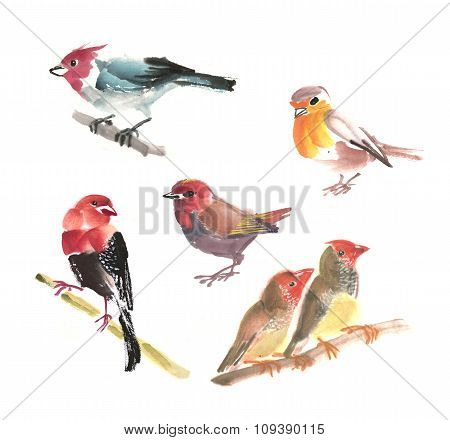Collection of little birds
