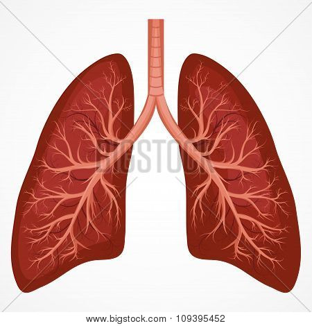 Human Lung anatomy diagram