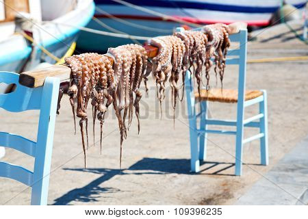 Octopus   Drying  In