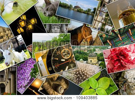 Mosaic collage with pictures of different places landscapes flowers insects objects and animals shot