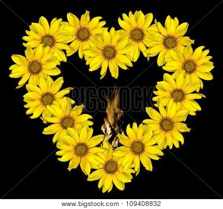 Heart Of Yellow Flowers Of Decorative Sunflowers Helinthus And Fire Flames Inside Isolated On Black