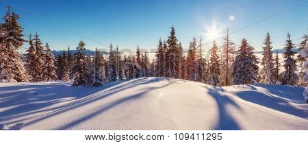 Majestic winter landscape glowing by sunlight in the morning. Clear blue sky. Dramatic and picturesque wintry scene. Location  Carpathian, Ukraine, Europe. Beauty world.