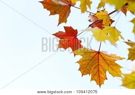 Yellow Autumn Leaves Against Bright Sky