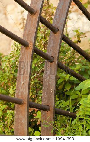 Overgrown Iron Gate