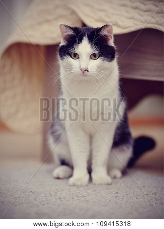 The Domestic Cat White With Black A Color