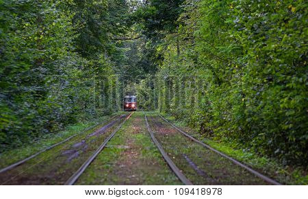 Kiev, Ukraine - Semptrmber 16, 2015: Tram goes through a tunnel in the forest