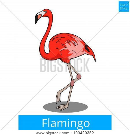 Flamingo learn birds educational game vector