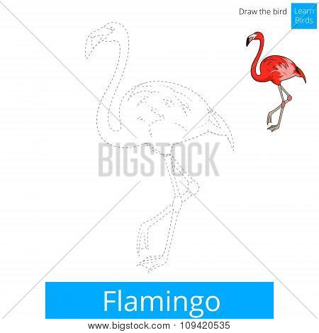 Flamingo bird learn to draw vector