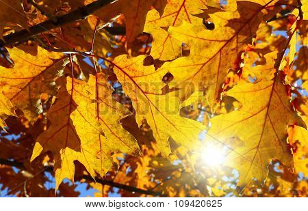 Bright Autumn Branch And Sunlight