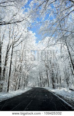 Snowy Winter Road Scene