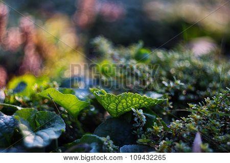 Grean Leaf On Bokeh Background