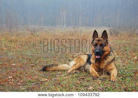 A dog in autumn forest.