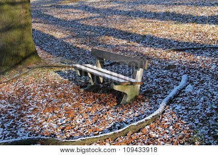 bench in cold autumn