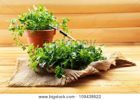Fresh parsley in pot on wooden table