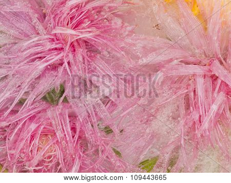 Bright Pink Ice Organic Abstraction