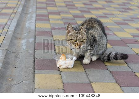 City cat fears that someone would take away its box with the lunch