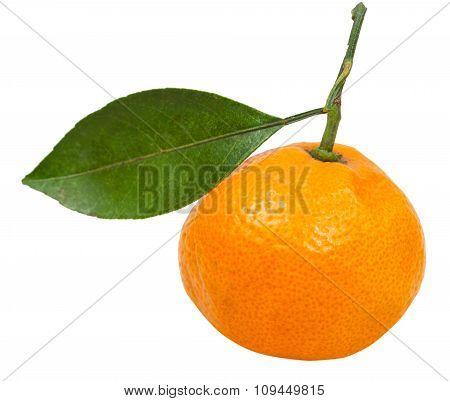 Fresh Ripe Abkhazian Mandarin With Leaf Isolated