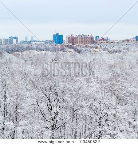 Snow Oak Trees In Woods And City In Winter Day