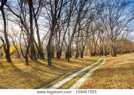 autumn forest and ground road near river, beautiful landscape