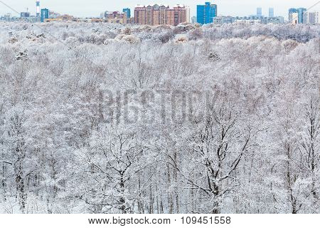 City And Snow Forest In Winter Day
