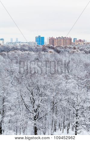Snow Oak Trees In Forest And City In Winter