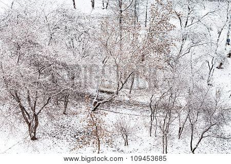 Footpath In Snow Urban Garden In Winter
