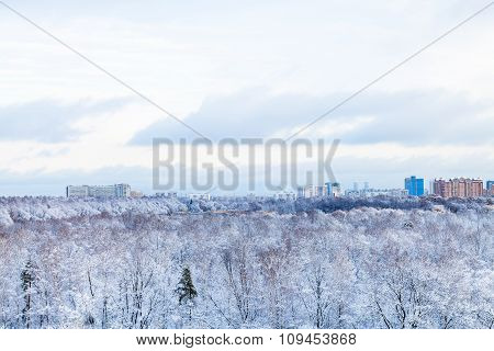 City And Frozen Park In Winter