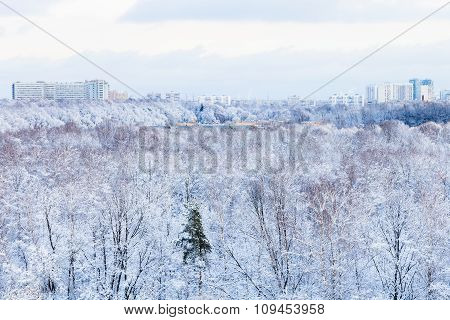 City Houses And Frozen Park In Winter