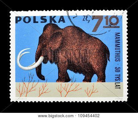 Poland 1965 Mammoth