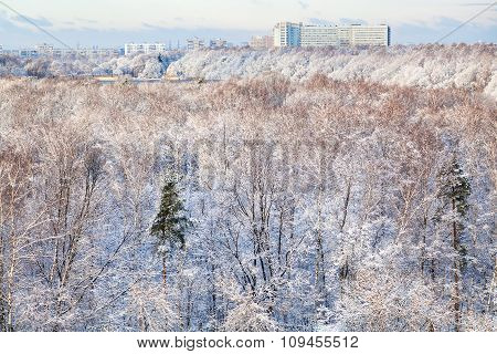Snow Woods And Urban Houses In Winter