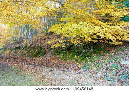 Path in Moncayo Natural Park, Zaragoza, Aragon, Spain