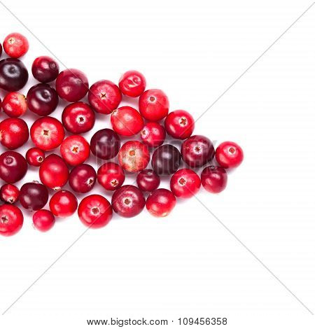 Natural forest cranberry. Red, ripe cranberries macro view. white background