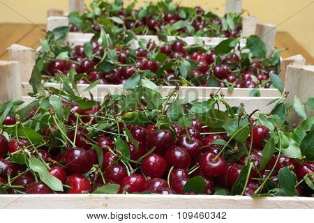 Wooden box with ripe red cherries