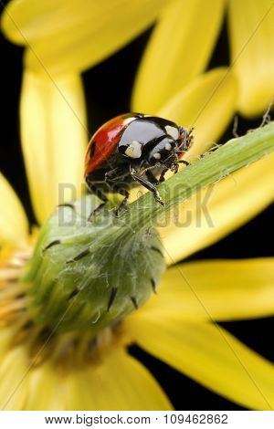 ladybug on flower stem