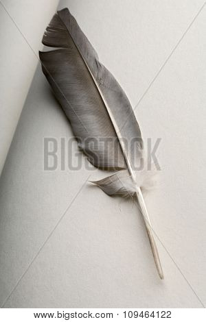a quill pen on an open book page