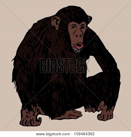 Sedentary Young Chimpanzees
