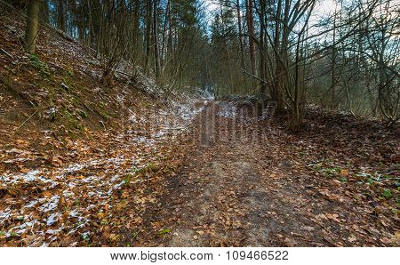 Landscape Of Late Autumnal Forest With First Snow