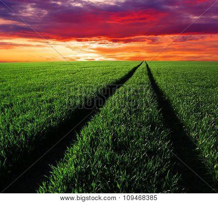 Sunset over a green field
