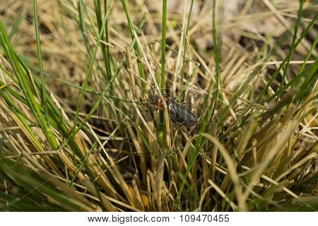 Beetle In The Grass