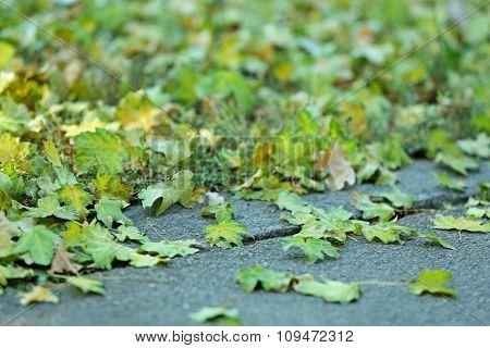 Green fallen leaves on grey asphalt background, close-up