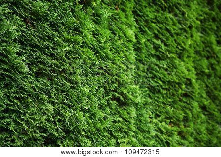 Natural green leaf wall background
