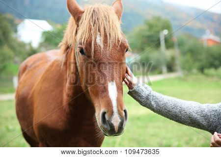 Girl feeding horse on meadow