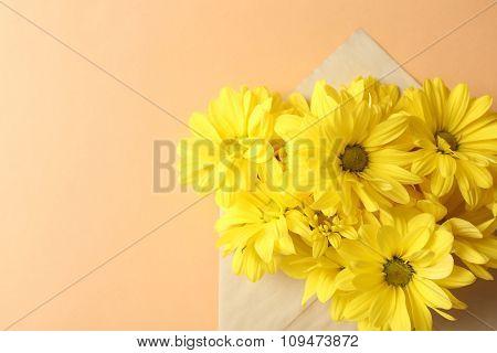 Yellow chrysanthemum in envelope on beige background