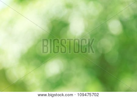 Abstract green nature background