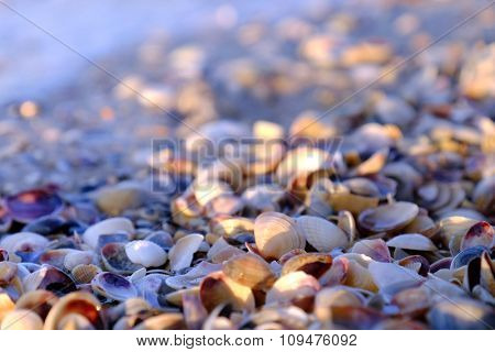 Close up view on  small seashells beach in the morning