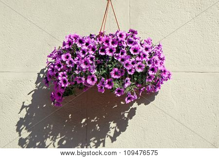 Beautiful flowers on wall background