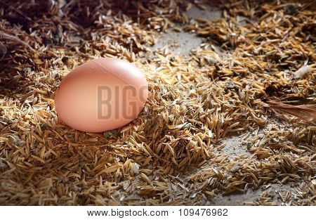 Brown Eggs At Nest In Chicken Farm