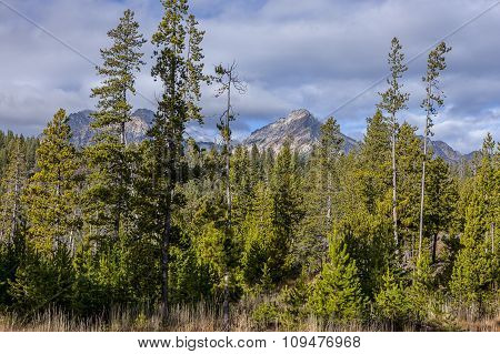 Sawtooth Range Behind The Trees.