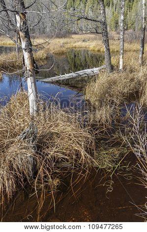 Idaho Marsh On A Sunny Day.