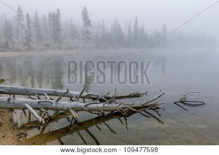 Trees In Water In Stanley Lake.